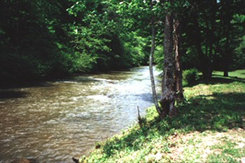 Mountaintown Creek in Ellijay Georgia